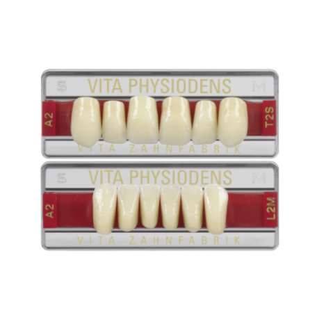 Dents VITA Physiodens